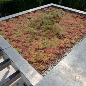 Construction à toit plat - toit végétalisé